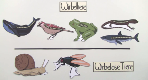 http://www.sofatutor.com/biologie/videos/ordnung-im-system-der-wirbeltiere